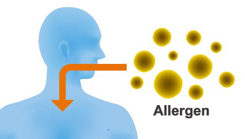 ハウス ダスト アレルギー